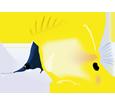 Poisson tropical forcipiger flavissimus adulte - couleur 14