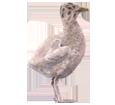 Albatros ##STADE## - couleur 5