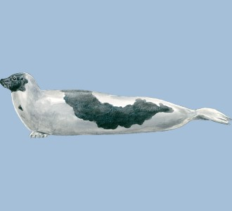Recueillir un animal marin d'espèce phoque
