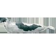 Phoque adulte - couleur 32