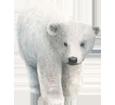 Ours blanc bébé - couleur 7