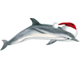 Dauphin commun adulte - couleur 117