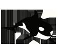 Orque adulte - couleur 16023