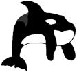 Orque adulte - couleur 16025