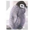 Manchot empereur bébé - couleur 59